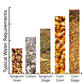 Sorghum Water Usage
