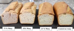 Gluten Free Waxy Sorghum Bread