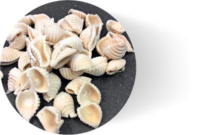 Gluten Free Frozen Pasta Shells